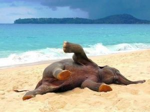 elephant sunbathing