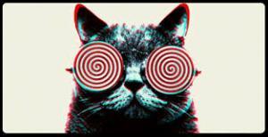 hypnotizing cat