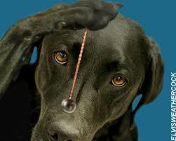 hypnotizing dog