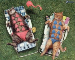 sunbathing,-cats-157310