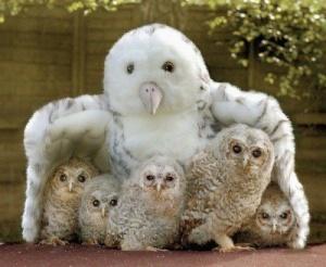 group hug 4