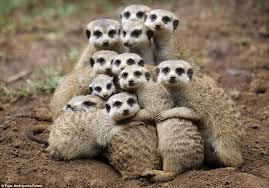group hug 7